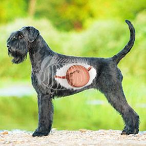 Spezielle Ernährungsthemen für Hunde