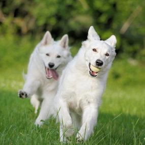 Hundesport