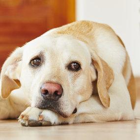 Stoffwechselerkrankungen beim Hund