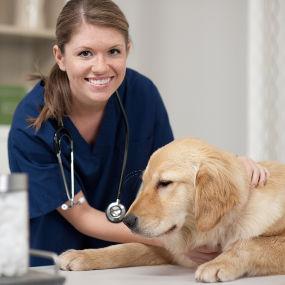 Tierarztbereich