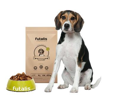 beagle futter individuell f r ihren hund erstellen. Black Bedroom Furniture Sets. Home Design Ideas