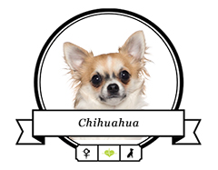 Chihuahua Futter für rassespezifische Krankheiten