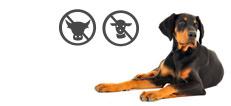 Dobermann Junghund allergisch auf Lamm und Rind