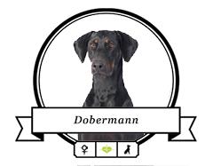Dobermann Futter für rassespezifische Krankheiten