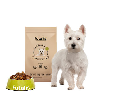 West Highland White Terrier Futter