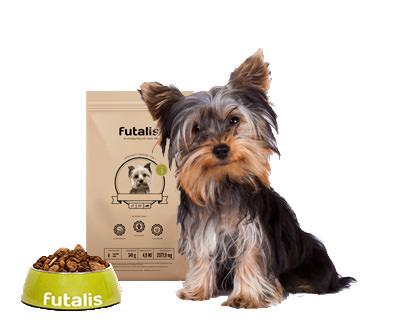 yorkshire terrier futter f r ihren hund erstellen. Black Bedroom Furniture Sets. Home Design Ideas