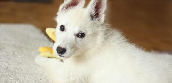 Hund und Halter wegen Corona zu Hause