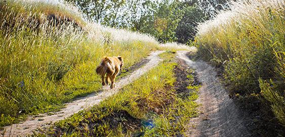 Hund am hohen Gras: Grannengefahr