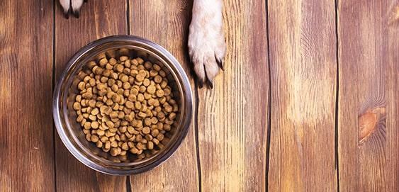 Futtermilben im Hundefutter vorbeugen