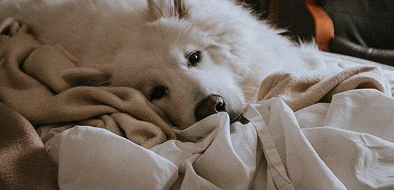 Hund nach Krampfanfall