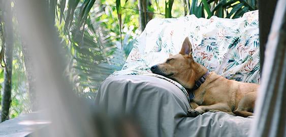 Wurmkur für Hunde mit engen Kontakt zum Menschen