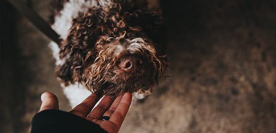 Giardien beim Hund erkennen