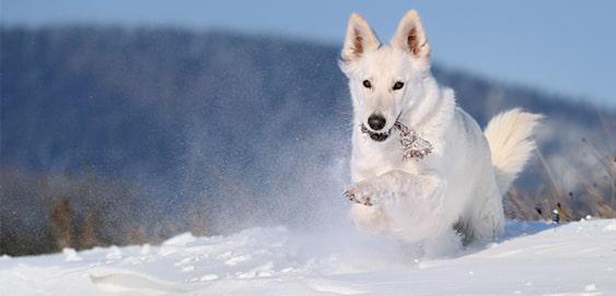 Hund im Winterurlaub im Schnee