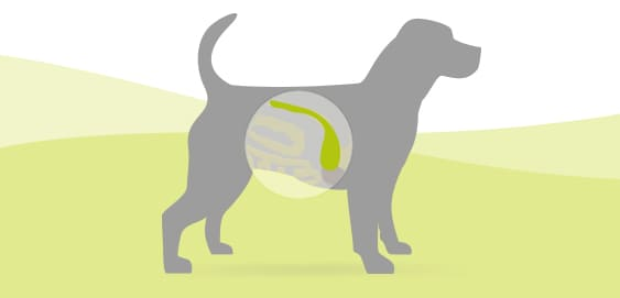 Pankreatitis und Pankreasinsuffizienz beim Hund