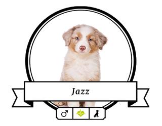 Australian Shepherd Jazz