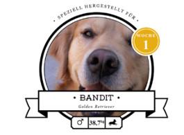 futalis Kundenstimme von: Bandit (Golden Retriever)