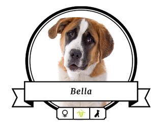 Bernhardiner Bella