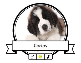 Bernhardiner Carlos