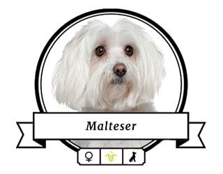 Malteser Momo