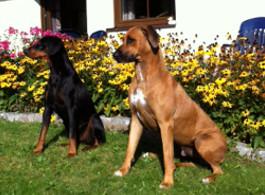 futalis Kundenstimme von: Tyson (Dobermann) und Aris (Rhodesian Ridgeback)