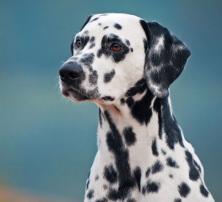 Harnsteine beim Hund