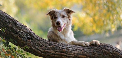 Hund liegt in Natur
