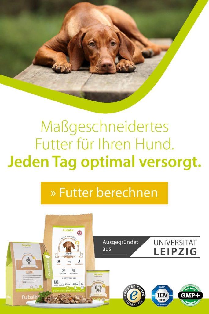 Maßgeschneidertes Hundefutter für jeden Tag