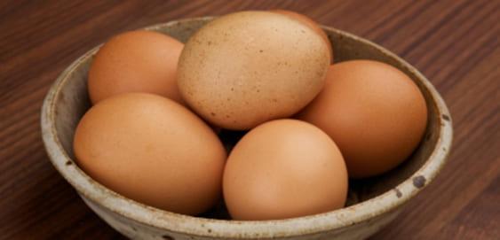 Gekochte Eier gesund für Hunde