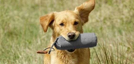 Hund mit Futterdummy