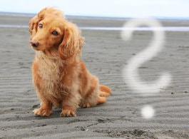 Fragen zum Hundefutter