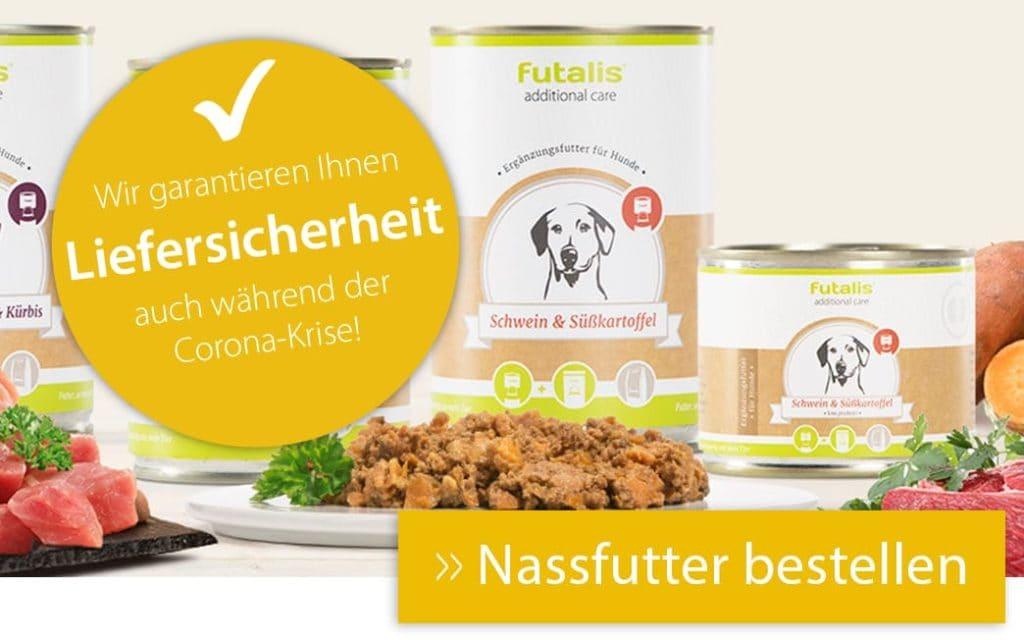 Bestes Nassfutter für Ihren Hund