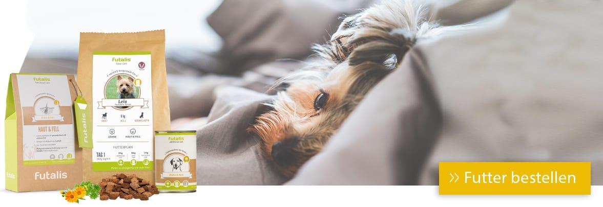 Hund liegend auf DEcke