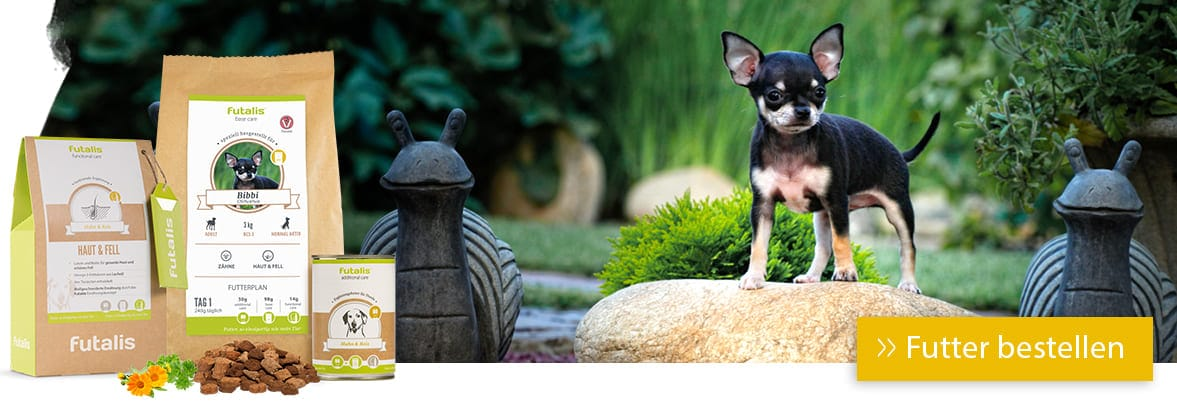 Chihuahua Rassefutter