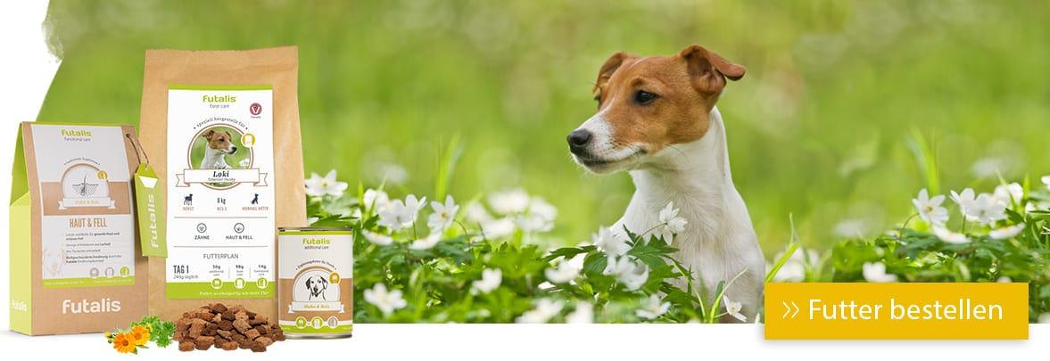 Jack Russell Terrier Rassenfutter