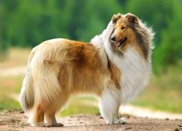 Hefe für Hunde