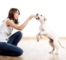 Tricks mit Hunden
