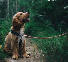 Hund mit Schleppleine