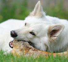 Knochen im Hundefutter