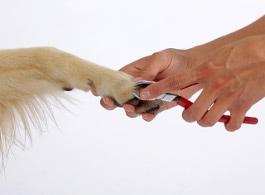 Krallen schneiden beim Hund