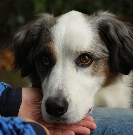 Erfolge beim Training von Hundekommandos