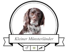 Kleiner Münsterländer Portrait