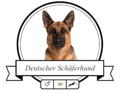 Deutscher Schäferhund rassespezifische Krankheiten
