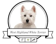 West Highland Terrier Rassenmerkmale