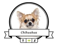 Chihuahua Rassenfutter