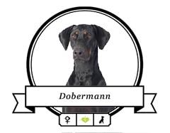 Dobermann rassespazifische Krankheiten