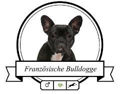 Französische Bulldogge Rassenmerkmale