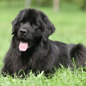 Morbus Cushing Syndrom beim Hund
