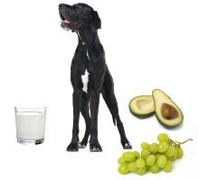 Hund mit giftigen Lebensmitteln