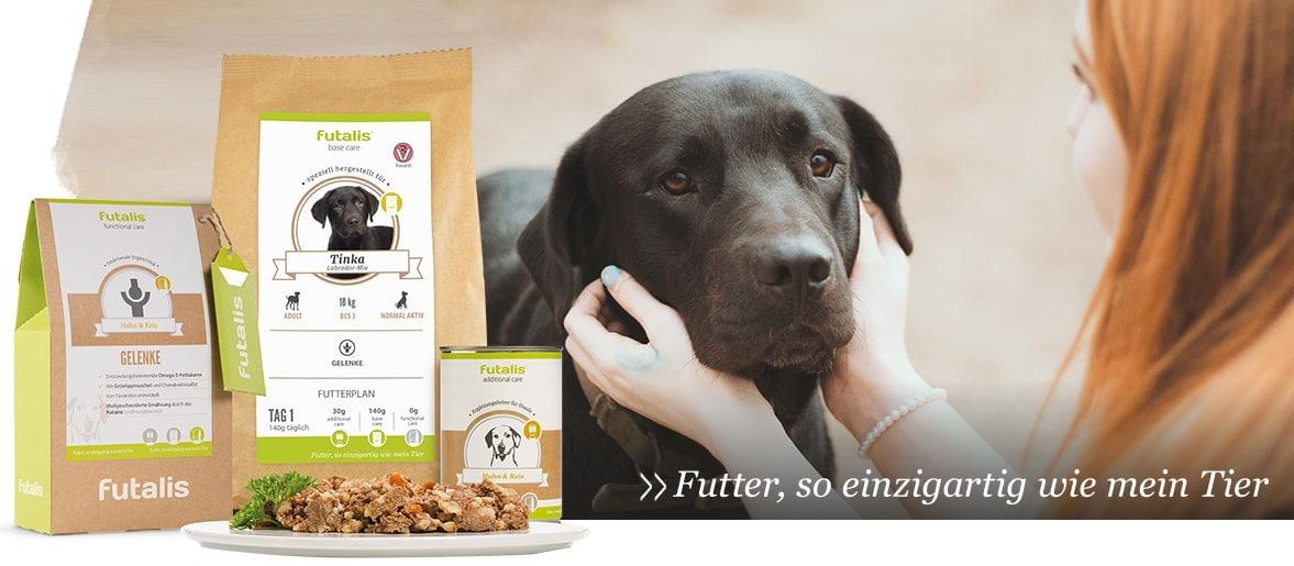 Gekochte Eier bei eines gesunden Hundeernährung
