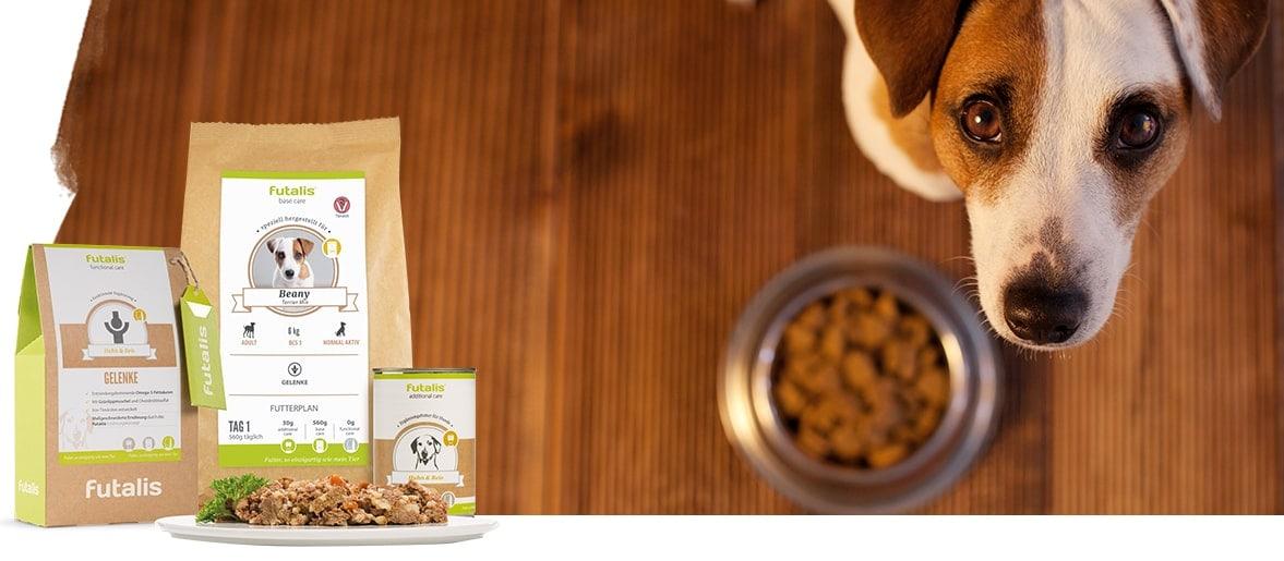 Futtermenge - Wie viel Futter braucht ein Hund?